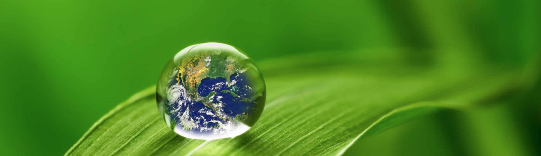 bubble on leaf that looks like globe